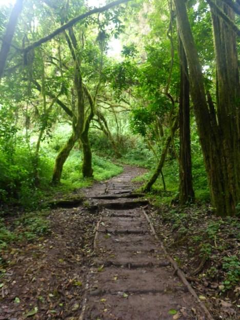 Stairs Lemosho Kilimanjaro