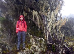 Forest Kilimanjaro endemic