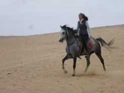 ride pyramids horse cairo