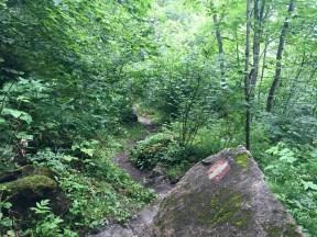 Trail forest Kaprun