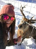 deer feeding Forsthofgut