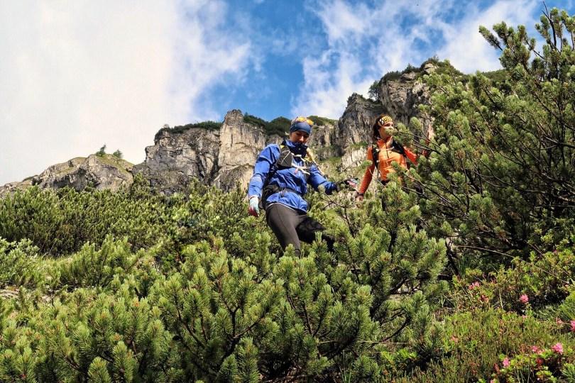 mountain pines hiking