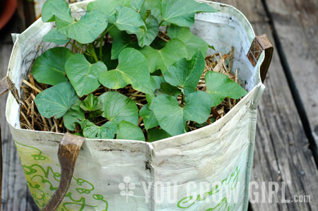 You Grow Girl How To Grow Sweet Potatoes In A Bag