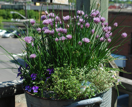 You Grow Girl Cheap Easy Container Idea Chive Basin
