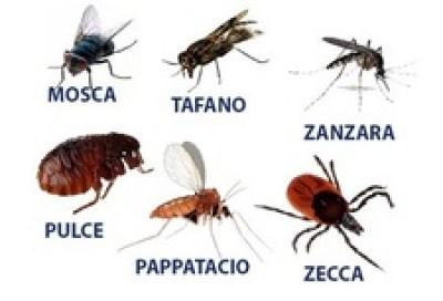 ectoparassiti