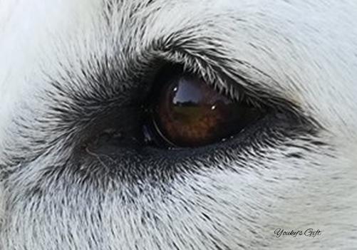 occhio di Bikila