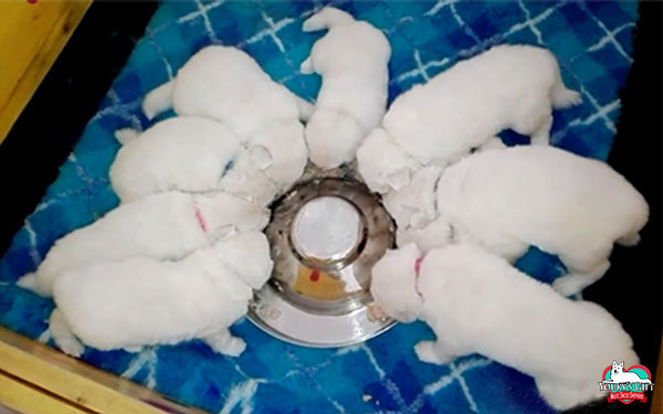 puppy-food periodo neonatale