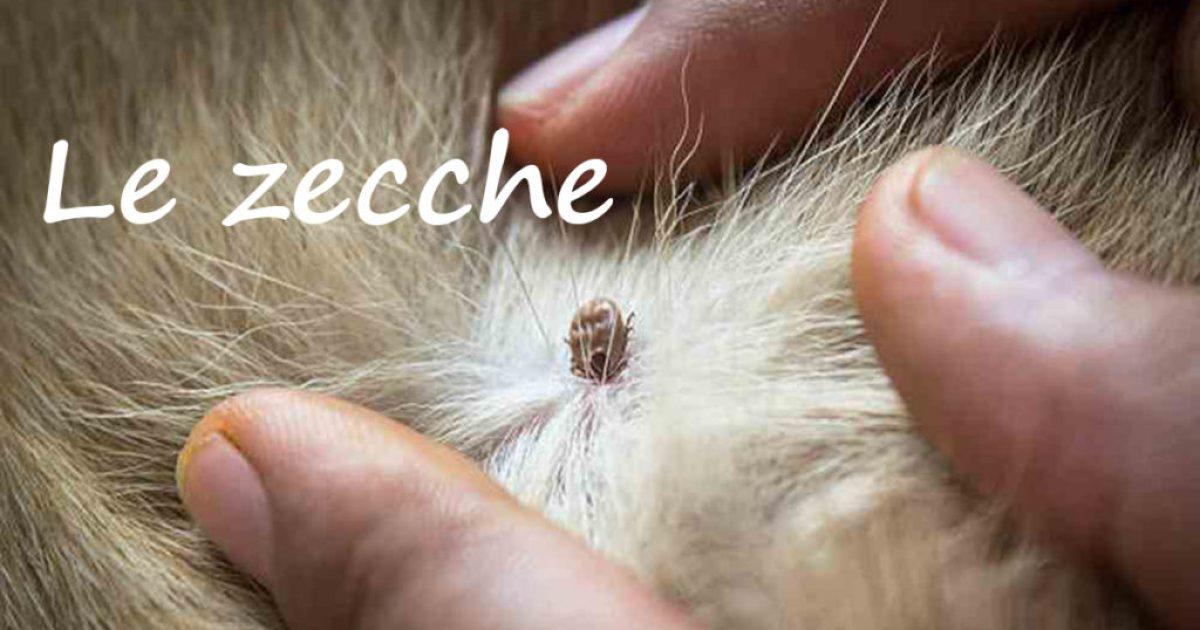 zecche e cuccioli pastore svizzero bianco intro