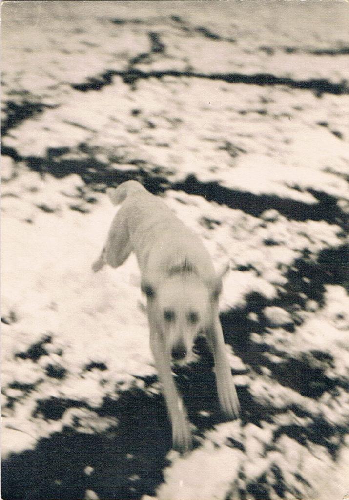 un po' di noi giochi pastore svizzero bianco cuccioli youky's gift