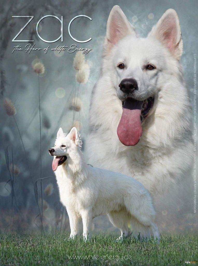zac-poster