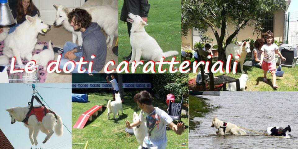 doti caratteriali pastore svizzero bianco cuccioli youky's gift
