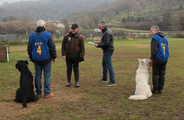 giudizio vivì bh pastore svizzero bianco cuccioli allevamento youky's gift