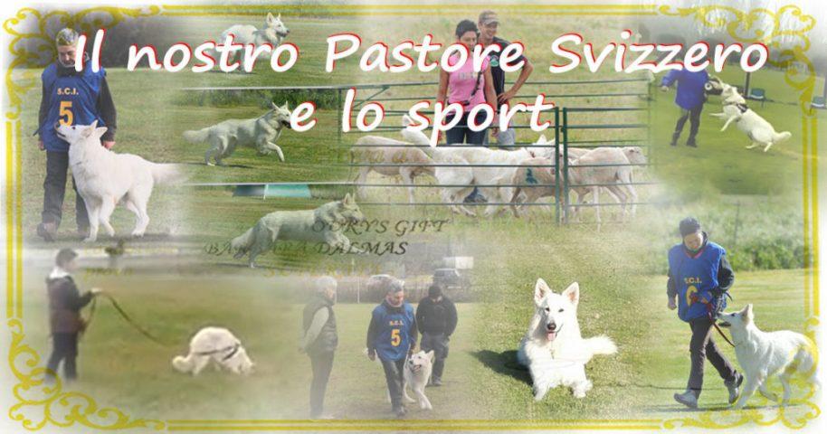pastore svizzero allevamento Youky's Gift e sport