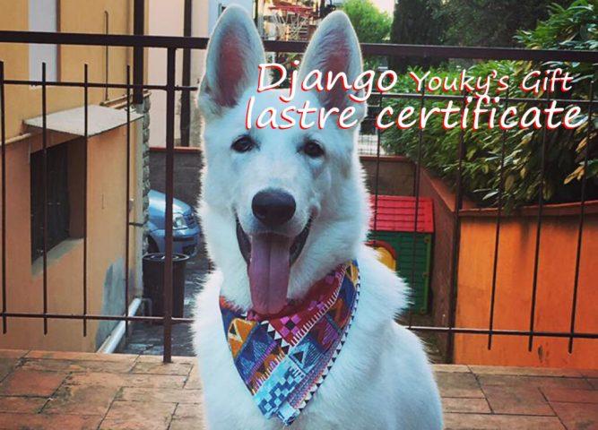 django pastore svizzero bianco cuccioli youky's gift lastre