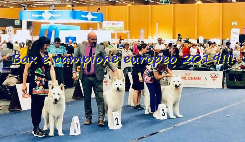 bax pastore svizzero campione europeo 2019