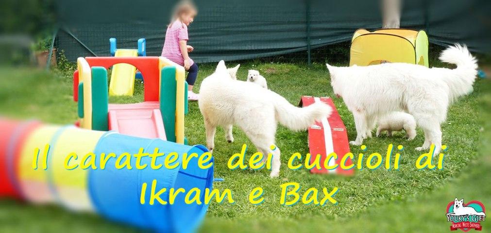 carattere cuccioli cucciolata G pastore svizzero