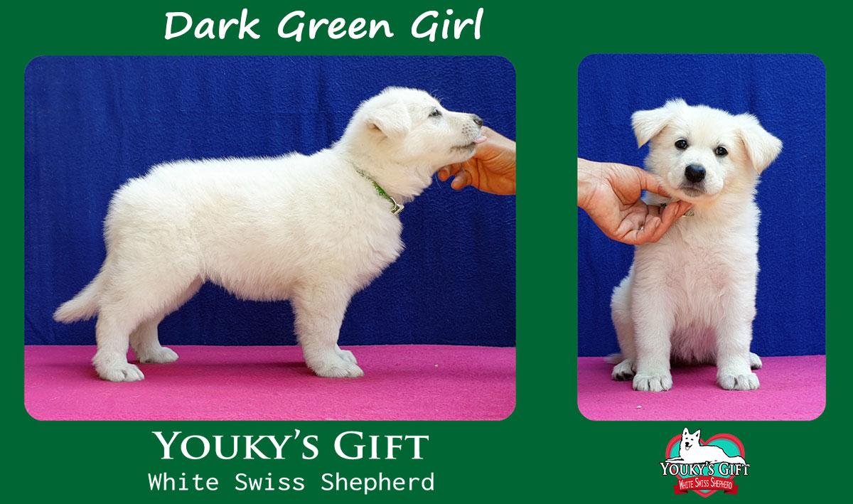 dark green girl cucciolata H cuccioli 6 settimane