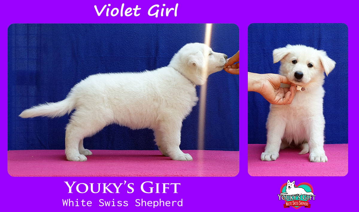 violet girl cucciolata H cuccioli 6 settimane