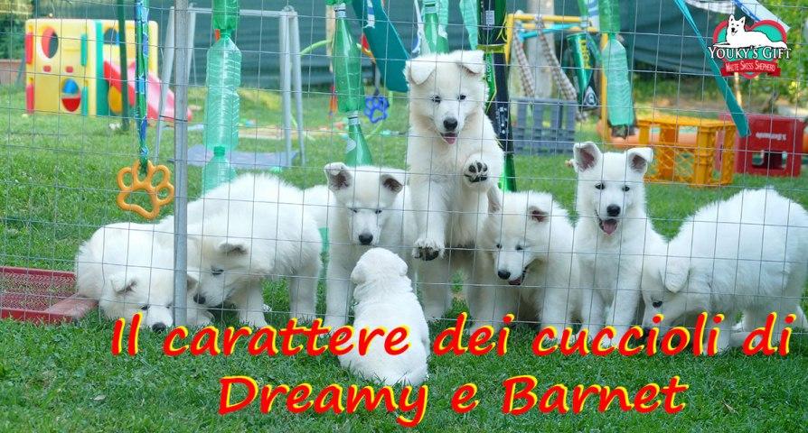 carattere cuccioli cucciolata H pastore svizzero