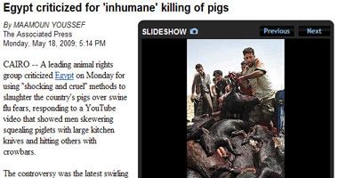 استياء جماعة بارزة للرفق بالحيوان من قرار ذبح الخنازير