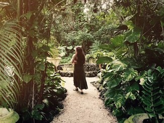 green trees pathway with woman walking in a green dress
