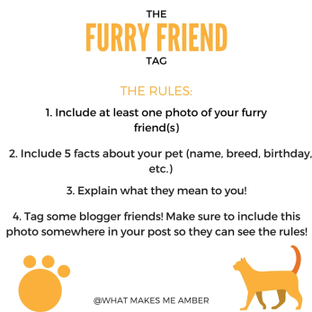 furry friend tag blog