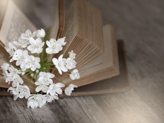 Book with white flowers on wood floor younfolded blog