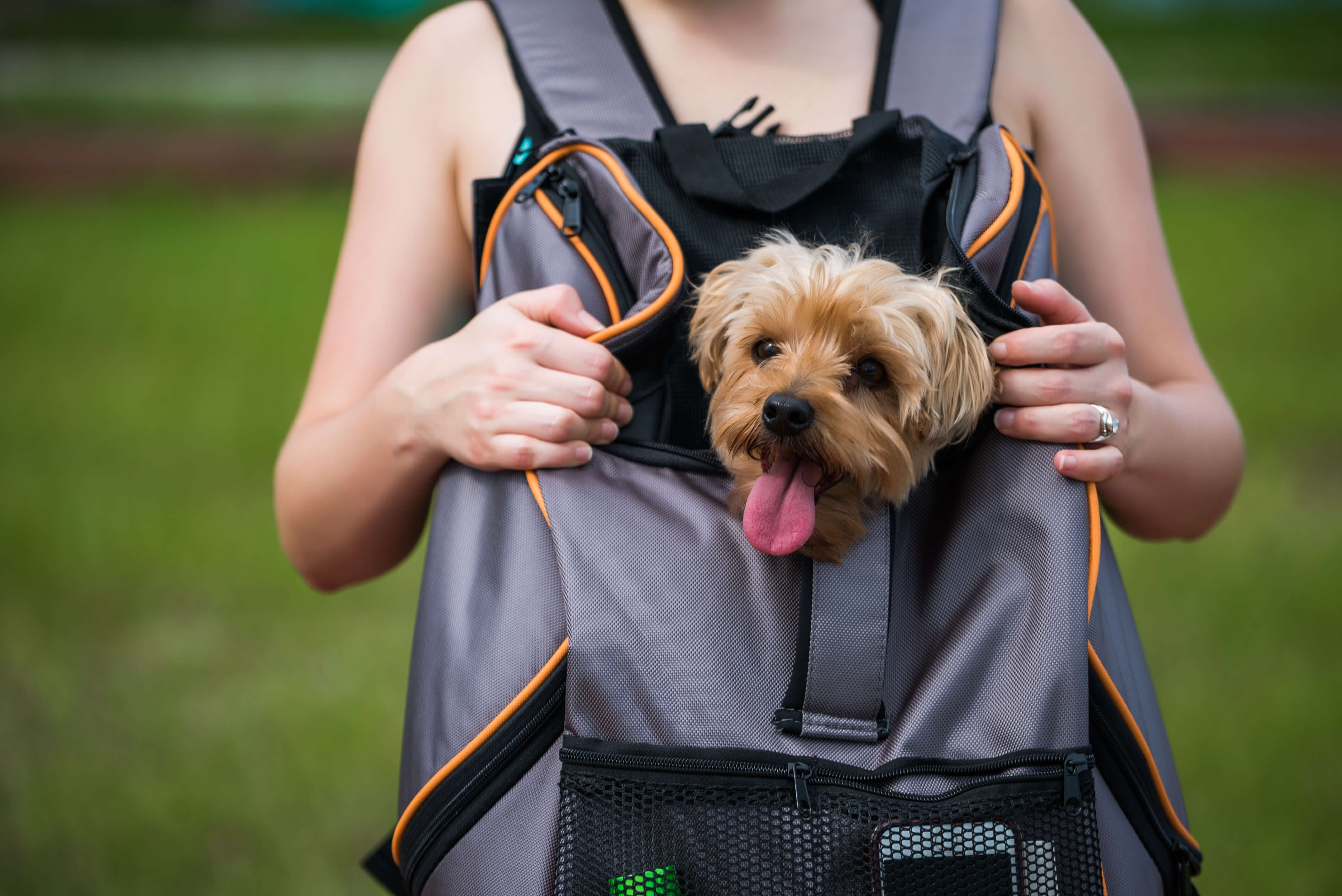 Lambo backpack worn in front dog carrier younfolded blog