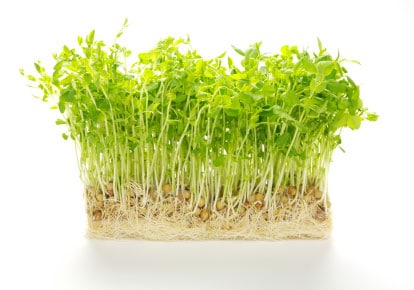 Bunch of Pea Sprouts