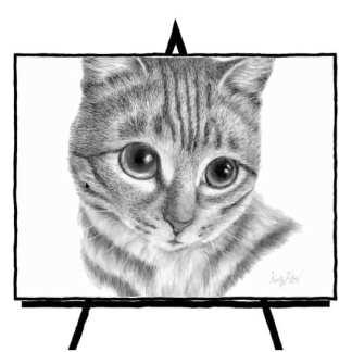 pencil sketch of tabby cat