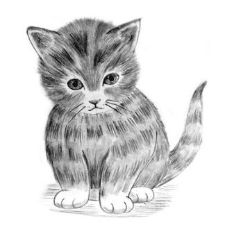 pencil drawn kitty