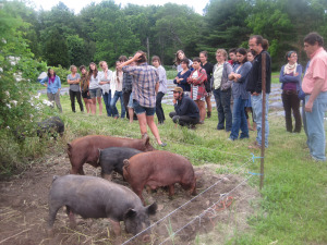 YFN pigs and tour pic