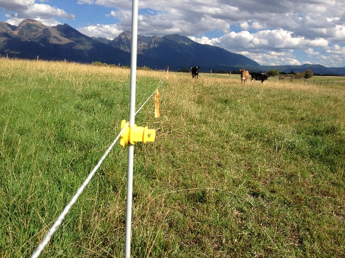 The Golden Yoke - Fenceline Difference