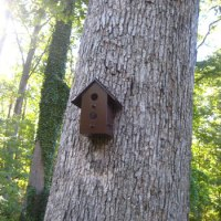 Painting And Hanging A Few Sweet Birdhouses