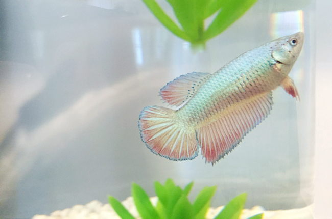 PodcastEp2-Chloe-The-Fish