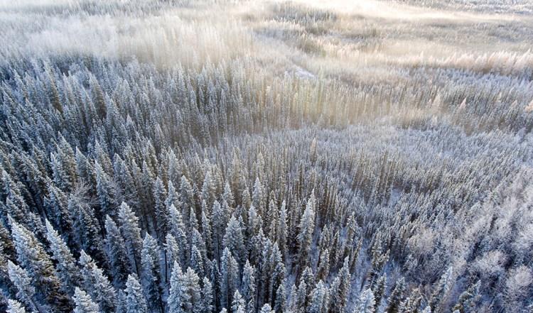 Northern Lights 農場 — 加拿大納爾遜堡