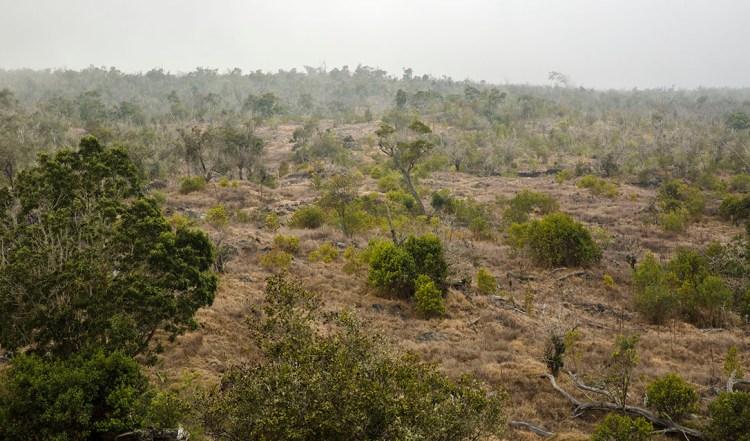 Kona 檀香木造林計劃 — 美國夏威夷島