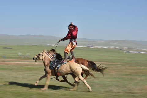 A rider stands atop two galloping horses in the run-up to a Mongol horse race.