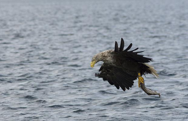 A sea eagle can be spotted while birdwatching in North Korea