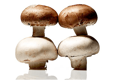 mushrooms.png (116713 bytes)