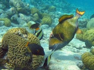 12 Coral reef Mombasa 300x225 100 Things to do in Kenya