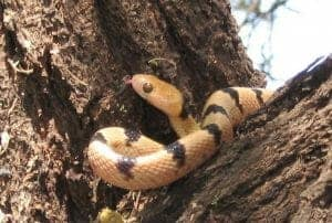8 Snake safari 300x202 100 Things to do in Kenya