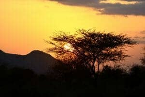 89 Aberdare 300x200 100 Things to do in Kenya