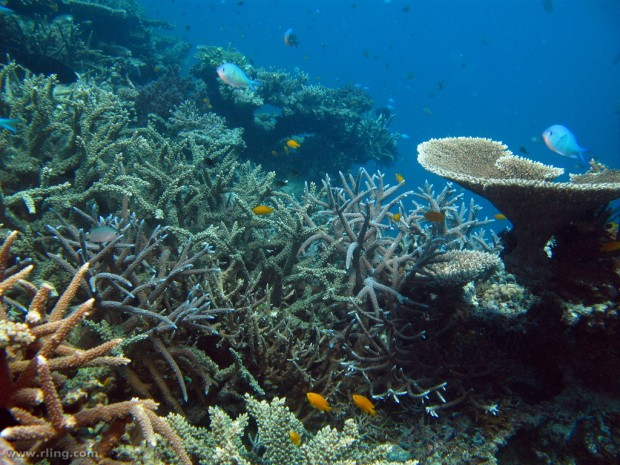 Famous Coral Reef Located Mexico