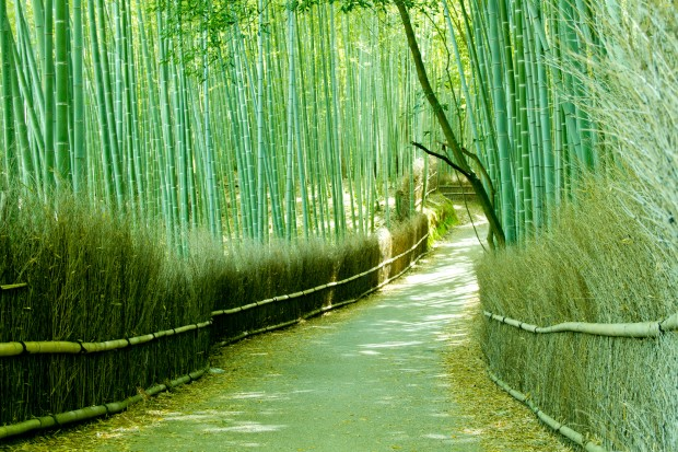 Enjoy The Beauty Of Sagano Bamboo Forest