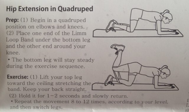 Hip extension in quadruped with resistance loop bands