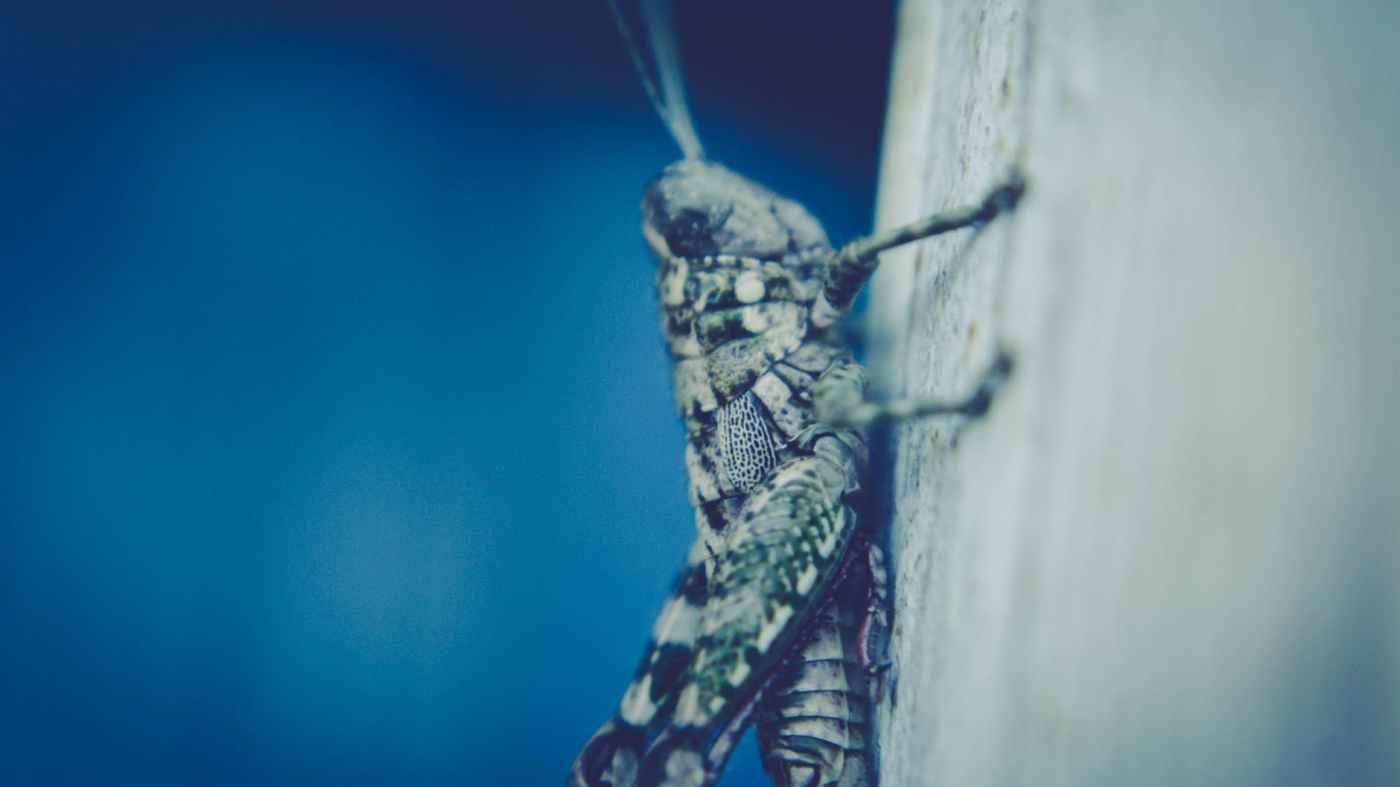 macro photograph of bush cricket
