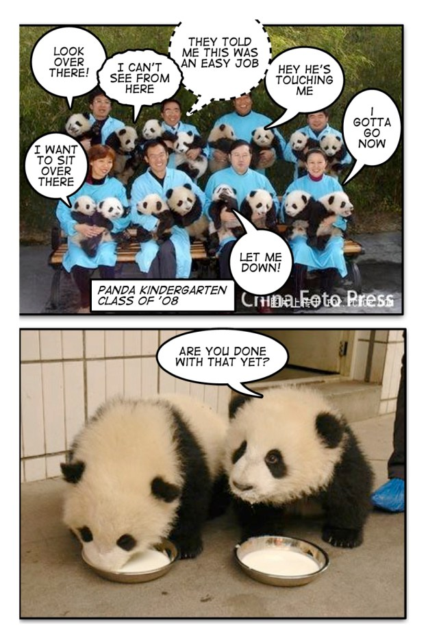 4) what I imagined the pandas were saying.