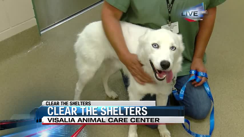 Clear the Shelters: Visalia