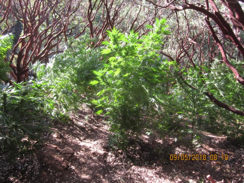 9-7 Sequoia Raid 1_1536382350064.JPG.jpg
